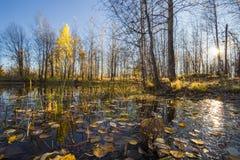 自然的横向 免版税库存照片