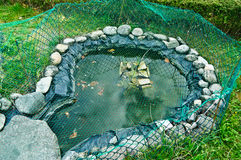 自然的水族馆 库存图片