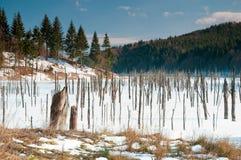 自然的湖 库存照片