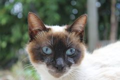 自然的猫 免版税库存图片