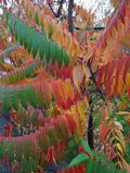 自然的生活从诞生到在花的死亡 免版税图库摄影