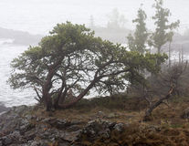 自然的盆景 免版税库存照片