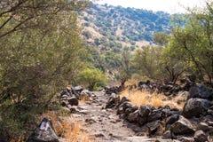 自然的看法在戈兰高地的在六角形水池附近在以色列 库存照片