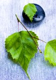 自然的秀丽 免版税库存照片