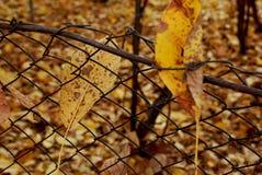 自然的秋天颜色。 库存照片