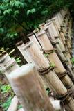 自然的竹子 免版税库存图片