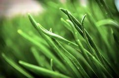 自然的绿色背景图象 免版税库存照片