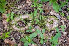 自然的脚印 免版税库存照片