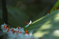 自然的自然秀丽 免版税库存图片