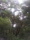 自然的茂盛在所有她的荣耀的 图库摄影