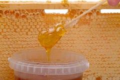 自然的蜂蜜 免版税库存图片