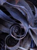 自然的螺旋 免版税库存图片
