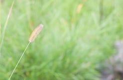 自然的软的迷离绿色摘要背景图象-放牧花,新芽,自然,早晨,露水 库存照片