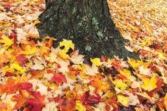 自然的金黄地毯 库存照片