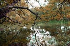 自然的颜色 免版税库存图片