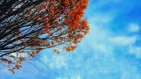自然的颜色 图库摄影