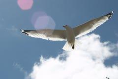 自然的飞行 免版税图库摄影
