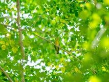 从自然的绿色背景 免版税库存图片