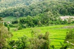 自然看法在国家村庄,泰国 免版税库存图片