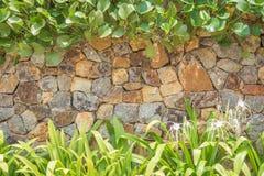 自然石墙和植物纹理背景 免版税库存照片