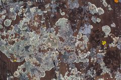 自然石头纹理与青苔的 摘要 免版税库存照片