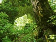 自然石门 库存照片