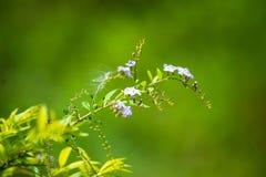 自然礼物  绿叶 生活和秀丽 库存照片