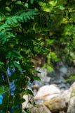 自然礼物  绿叶 生活和秀丽 免版税库存图片
