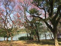 自然秀丽在公园 库存图片