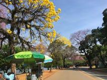 自然秀丽在公园 免版税图库摄影