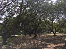自然秀丽在公园 免版税库存图片