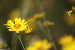 自然秀丽在夏天 免版税库存照片