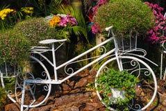 自然秀丽在庭院里 免版税图库摄影