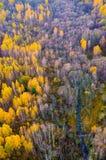 自然秀丽在立陶宛 免版税库存图片