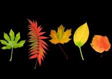自然秀丽的叶子 免版税库存照片