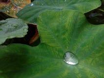 自然秀丽雨水下落  库存图片