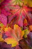 自然秋天叶子惊人的多色背景  多色叶子五颜六色的背景有自然光的 免版税库存图片