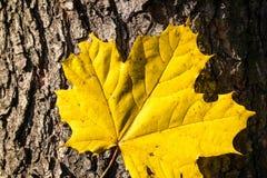 自然秋天的装饰 免版税库存图片