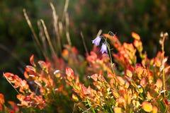 自然秋天背景-明亮的红色叶子 库存照片