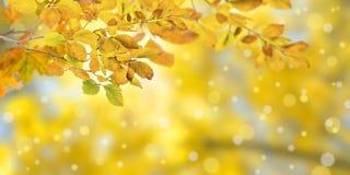 自然秋天背景 免版税库存照片