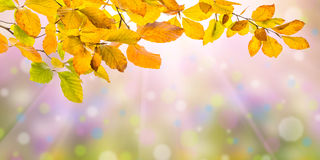 自然秋天背景 库存照片