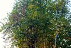 自然秋天 库存图片