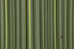 自然竹叶子背景样式纹理委员会 图库摄影