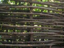 自然篱芭背景 图库摄影