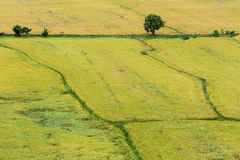 自然米领域 图库摄影