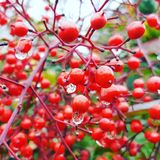 自然红色花 免版税库存图片