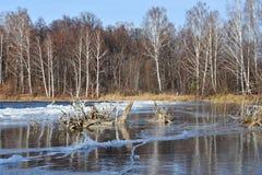 自然纪念碑-湖Uvildy在晴天,车里雅宾斯克地区的晚秋天 俄国 海岛的岸的森林 免版税库存图片
