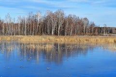 自然纪念碑-湖Uvildy在晴天,车里雅宾斯克地区的晚秋天 俄国 库存图片