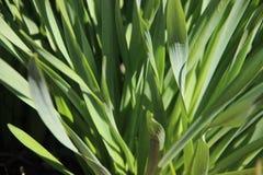 自然纯净 年轻绿色叶子的关闭 免版税库存照片