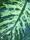 自然纹理 免版税库存图片
